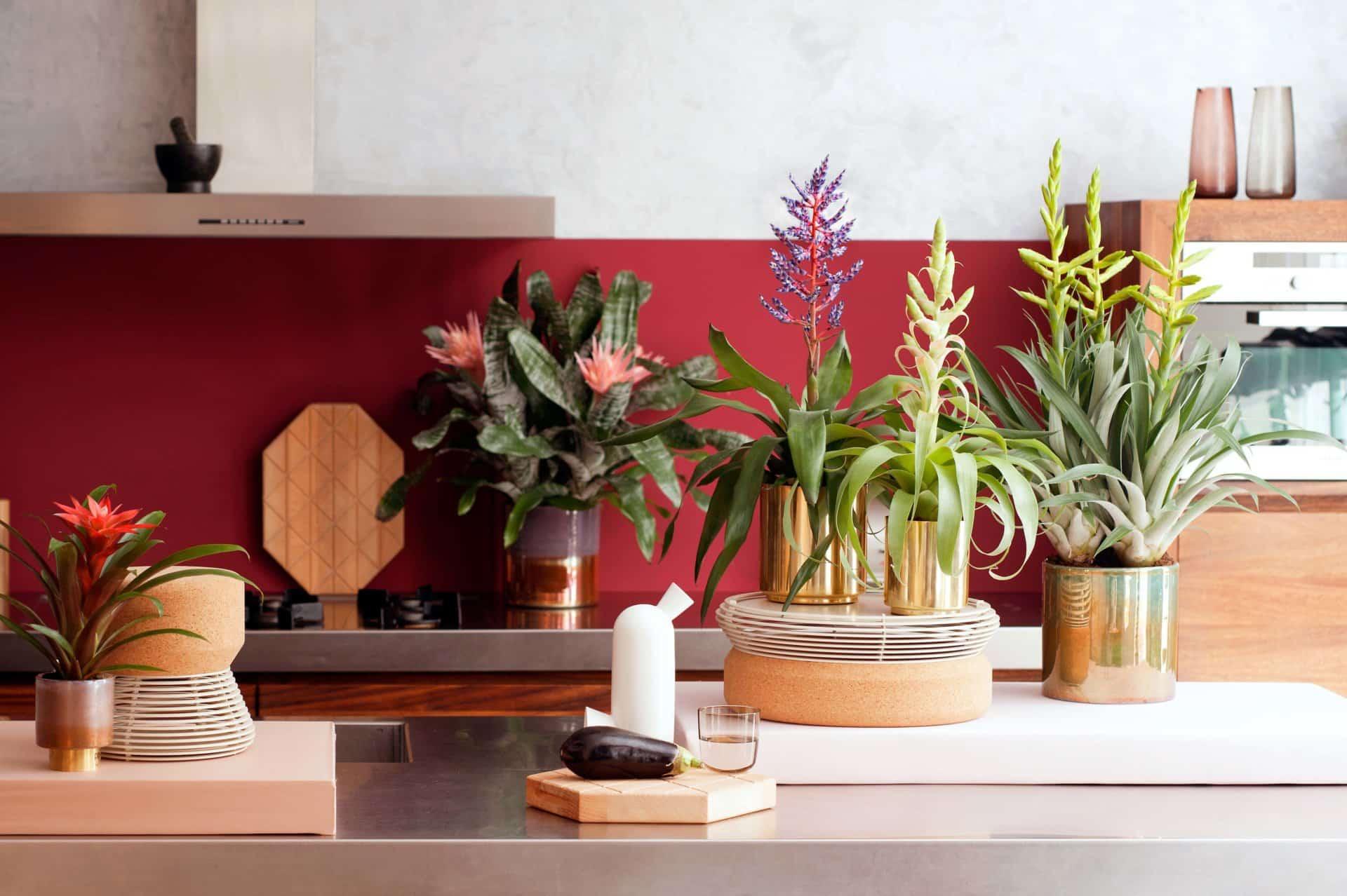 Quelle plante fleurie pour intérieur ?